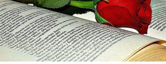 Rosa y libro Sant Jordi